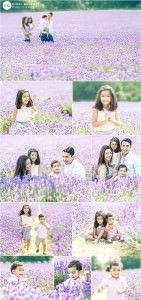 lavender-fields-family-photo-shoot-surrey
