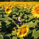 child-in-sunflowers