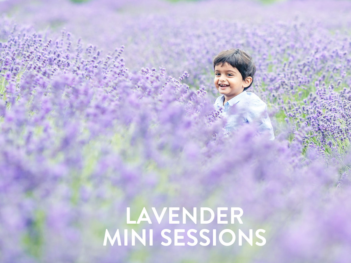 lavender-mini-sessions