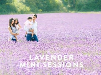 lavender-sessions-box