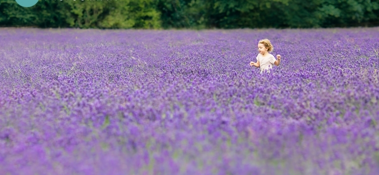 Family photo shoots in the lavender fields in Surrey