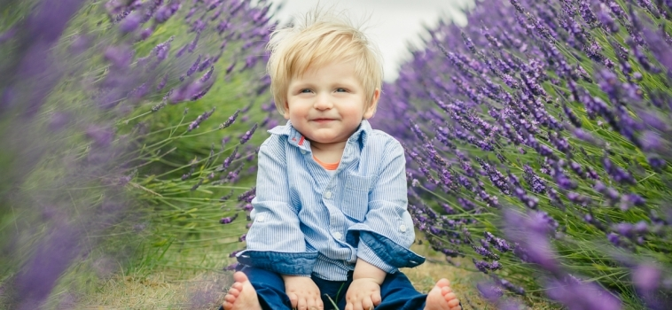 My mini sessions in the Surrey lavender fields