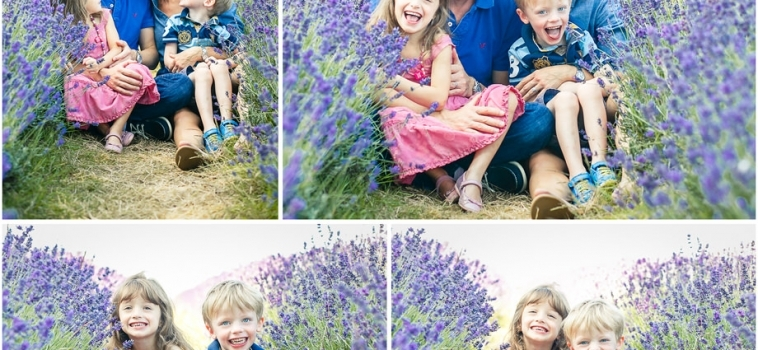 A family photo shoot in the lavender fields, Surrey