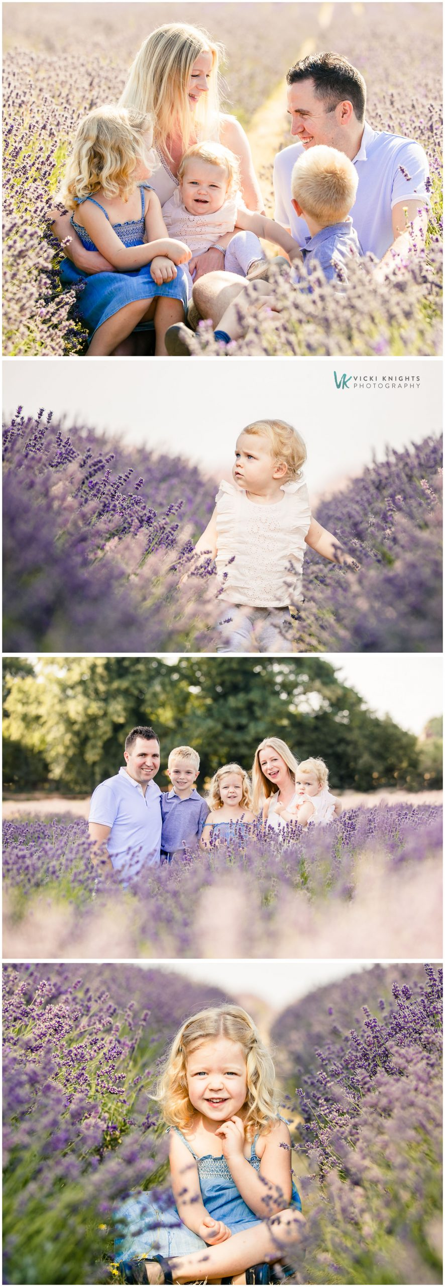 family photography lavender